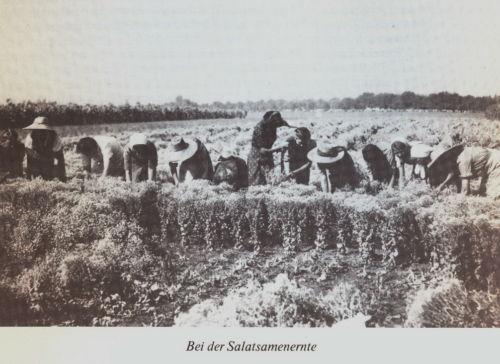 Bulkes1786-1944-foto-071