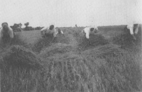 Bulkes1786-1944-foto-155