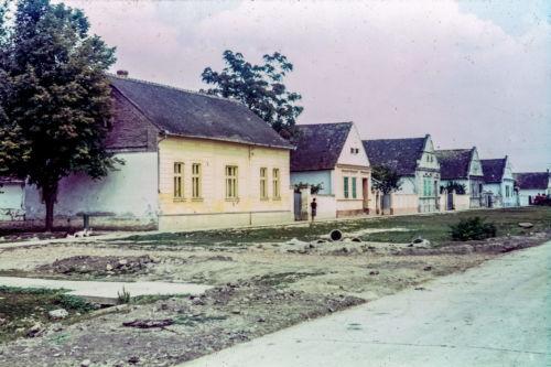 Titova od ul. 29.novembra ka Petrovačkoj, leva strana (1)